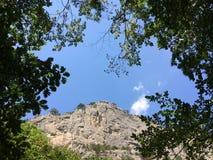 森林,树冠在天空的 免版税图库摄影