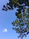 森林,树冠在天空的 库存图片