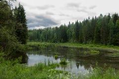森林,湖,池塘, 图库摄影