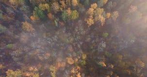 森林,照相机空中英尺长度从云彩开始慢慢地降下下来, 股票录像