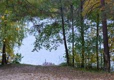 森林,秋天,自然,风景,树,树,秋天,森林,公园,绿色,季节,杉木,木头,叶子,雾,路,桦树,光, pa 免版税图库摄影