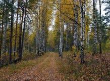 森林,秋天,自然,风景,树,树,秋天,森林,公园,绿色,季节,杉木,木头,叶子,雾,路,桦树,光, pa 库存照片