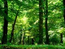 森林,阿塞拜疆 免版税库存图片