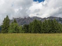 森林:意大利白云岩阿尔卑斯小组在夏时的绿色冷杉和峰顶有云彩的在背景中 免版税库存照片