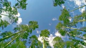 森林从下面 股票录像