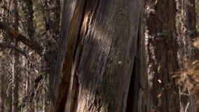 2森林 5个D作用-移动的树 影视素材