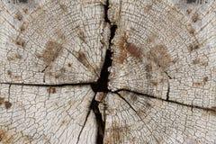 森林绿叶采蘑菇树桩结构树 图库摄影