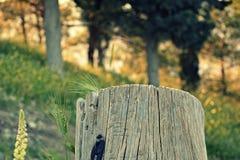森林绿叶采蘑菇树桩结构树 库存照片