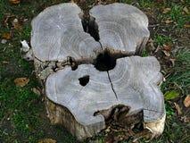 森林绿叶采蘑菇树桩结构树 免版税库存照片
