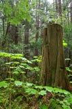 森林绿叶 免版税图库摄影