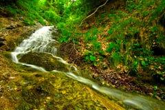 森林水小河 免版税库存图片