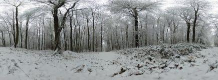 森林360度球状全景 免版税库存图片