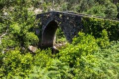 森林围拢的老石桥梁 库存照片