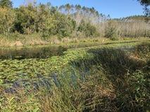森林10月2018年,土耳其的其次最大的淡水沼泽:阿贾拉尔在萨卡里亚,土耳其 免版税库存照片