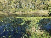 森林10月2018年,土耳其的其次最大的淡水沼泽:阿贾拉尔在萨卡里亚,土耳其 免版税图库摄影