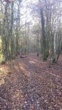 森林10月 免版税库存图片