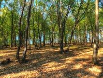 森林结构 免版税库存图片