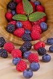 森林结果实莓果 免版税库存照片