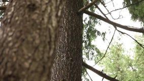 森林-树,植物 股票视频