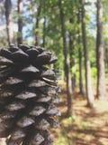 森林&橡子 免版税库存照片
