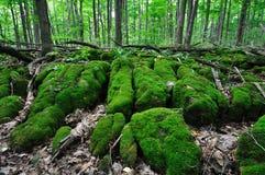 森林-泥炭藓3 免版税库存照片