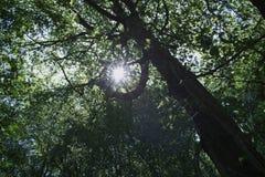 森林轻的星期日 库存照片