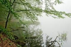 森林细节 免版税库存图片