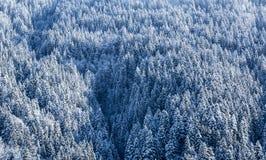 冻森林-细节 免版税库存照片
