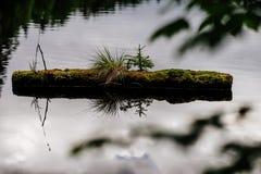 森林细节 免版税库存照片