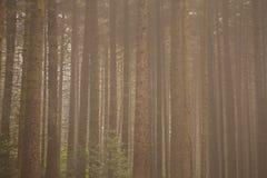森林主题的背景 免版税库存图片