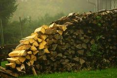 森林#2 库存照片