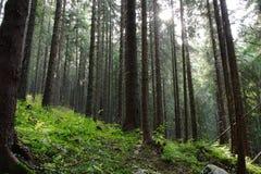 森林 免版税图库摄影