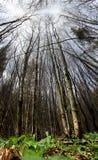 年轻森林 图库摄影