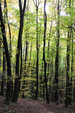 年轻森林 库存图片