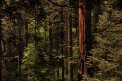 森林0215 免版税图库摄影