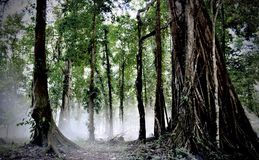 森林 库存照片