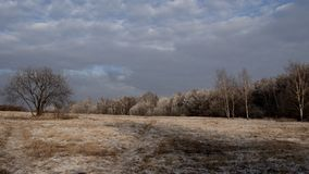 冻森林 免版税库存图片