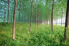 森林 免版税库存图片