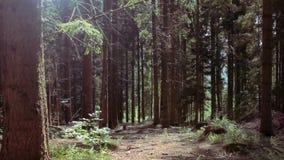 森林 股票视频