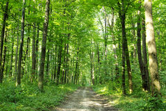 森林 免版税库存照片