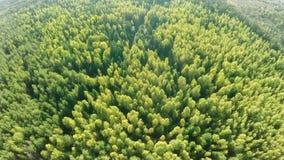 森林 股票录像