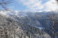 冻森林 免版税图库摄影