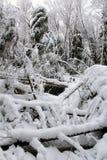 冻森林 免版税库存照片