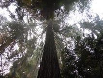 森林 库存图片