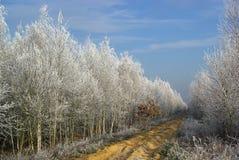 森林30 免版税库存照片