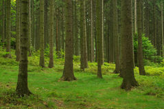 森林43 库存照片