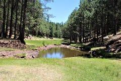 森林Canyon湖,可可尼诺县,亚利桑那,美国 免版税库存照片
