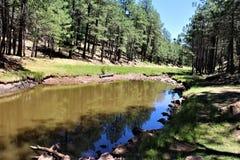 森林Canyon湖,可可尼诺县,亚利桑那,美国 免版税图库摄影