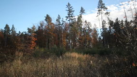 森林clearane在秋天 股票视频