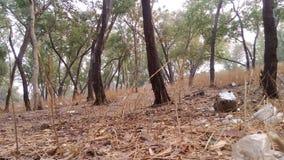 森林envirment 免版税库存照片